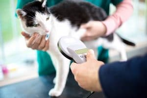 Can Fluffy's Microchip Expose You to Data Fraud?